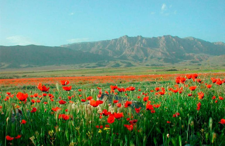 Tourism-in-armenia-tousrs-in-Spring